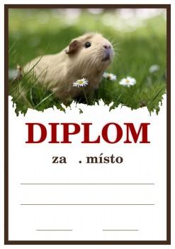 Poháry.com Diplom D19 holubi