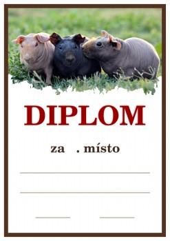 Poháry.com Diplom D25 holubi